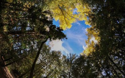 Virtuális Erőműből Virtuális Erdő