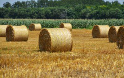 Klímaváltozás a mezőgazdaságban